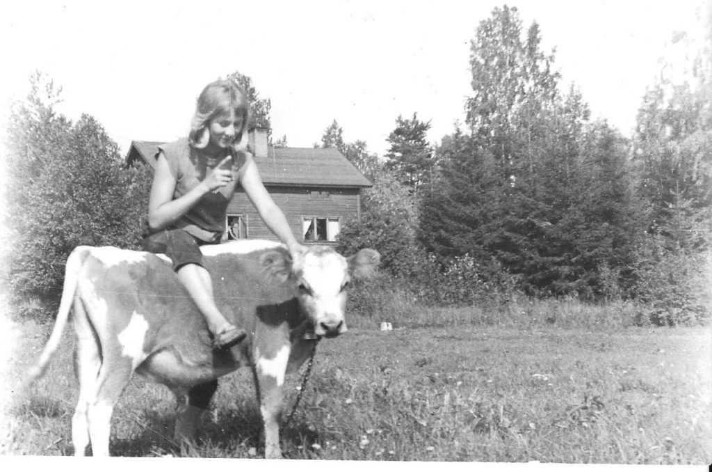 Sini Manninen en 1978, avec un veau devant la maison familiale à Liperi